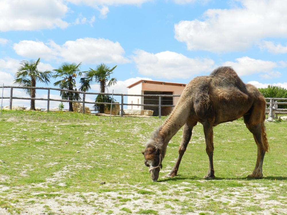 Defiplanet '- Tierpark auf