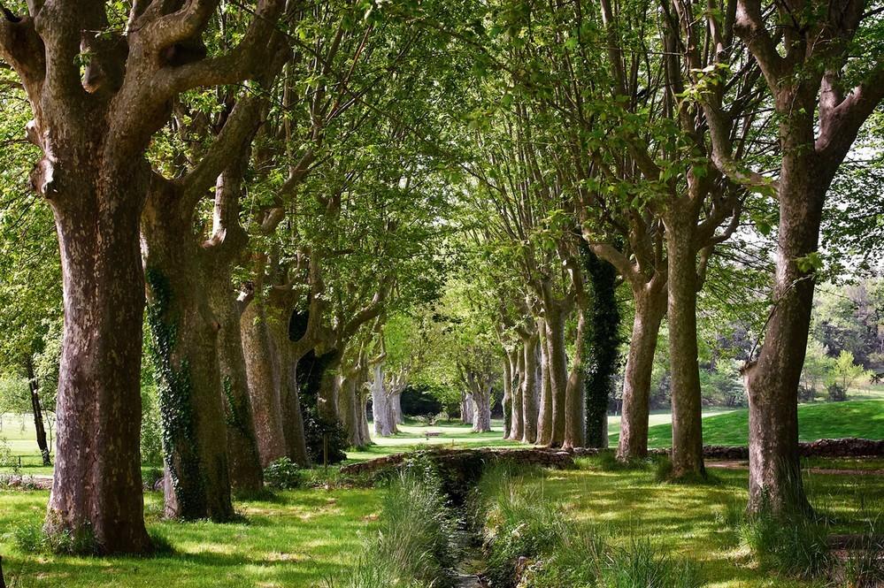 Domaine de Châteauneuf - foresta