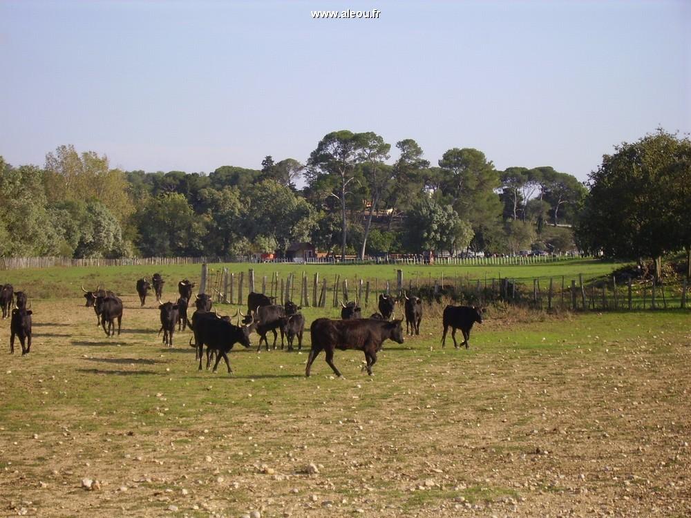 Domaine du Mas Brücke - die Herde