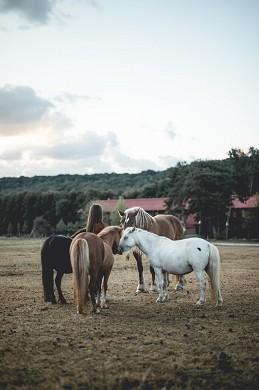 Nomads lebarn horses 31_2985