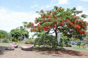 Jouanacaera - Seminar location in Martinique