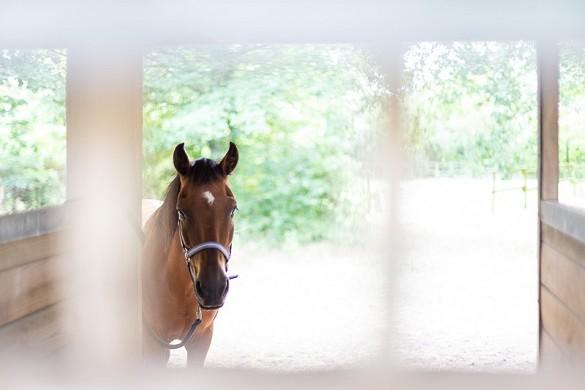 Domaine de l'oiselière - horse