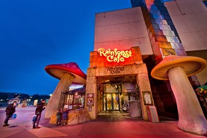 Rainforest Cafe - Event Restaurant