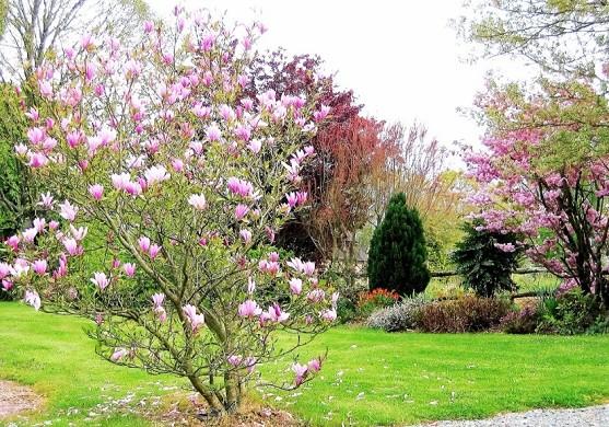 Swath inn - garden