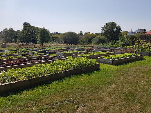 Puy du fou congress - 6000m² of 100% organic vegetable garden which supplies the restaurants.
