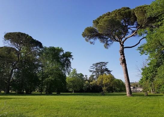 Château saint-denis - garden
