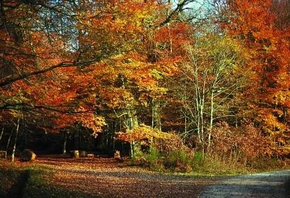 El blacklac - bosque de troncay