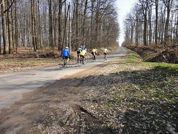 Noirlac - bicicleta en el bosque de troncais