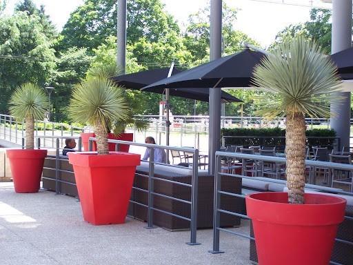 Atmosfera floreale - noleggio di piante verdi per eventi