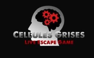 Gray Cells - proveedor de servicios en EVREUX