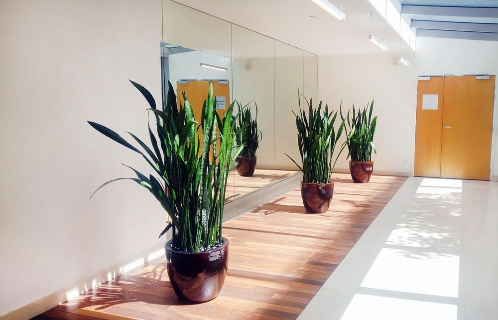 Interior verde - decoración floral.