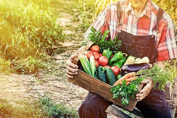 On the rocks - seasonal fruits and vegetables
