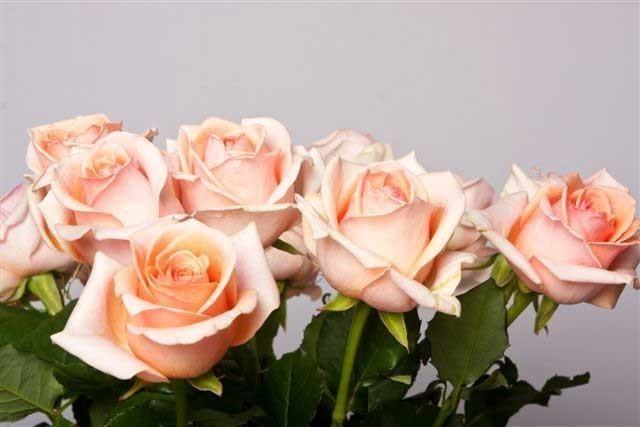 Flores de castaño - rosas
