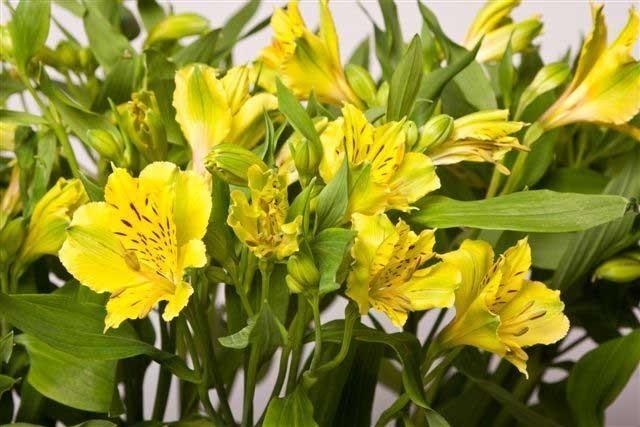 Flores de castaño - seminarios de floristería