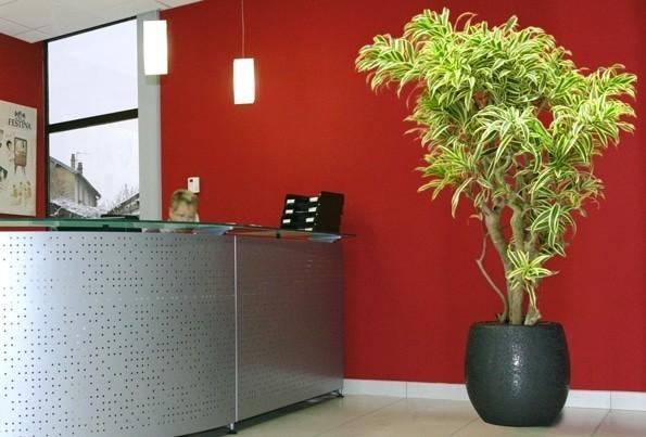 Pflanze nach Hause - Zimmerpflanze