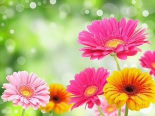 L'Amaryllis - Decorazione floreale