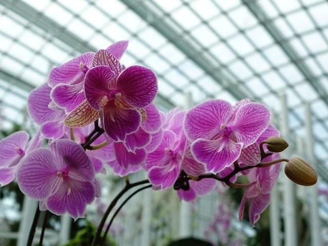 Jane luce - passione per i fiori