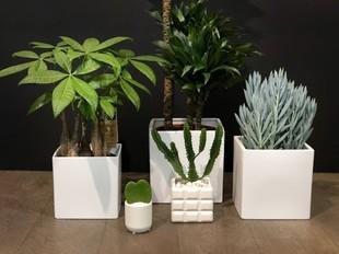 Tres colores verde - plantas