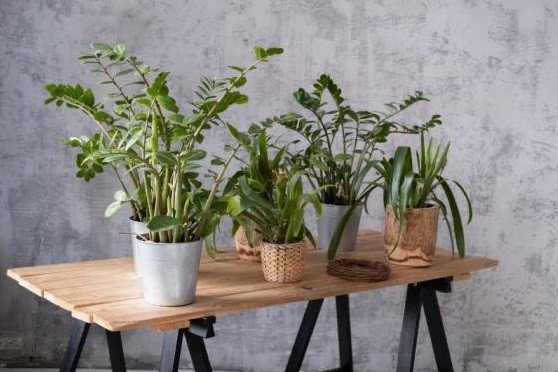 Anais gardens - plants