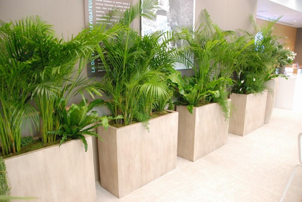 Green asset - plants
